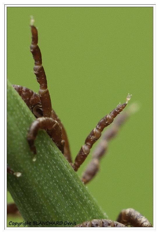 denis-blanchard-tique-8