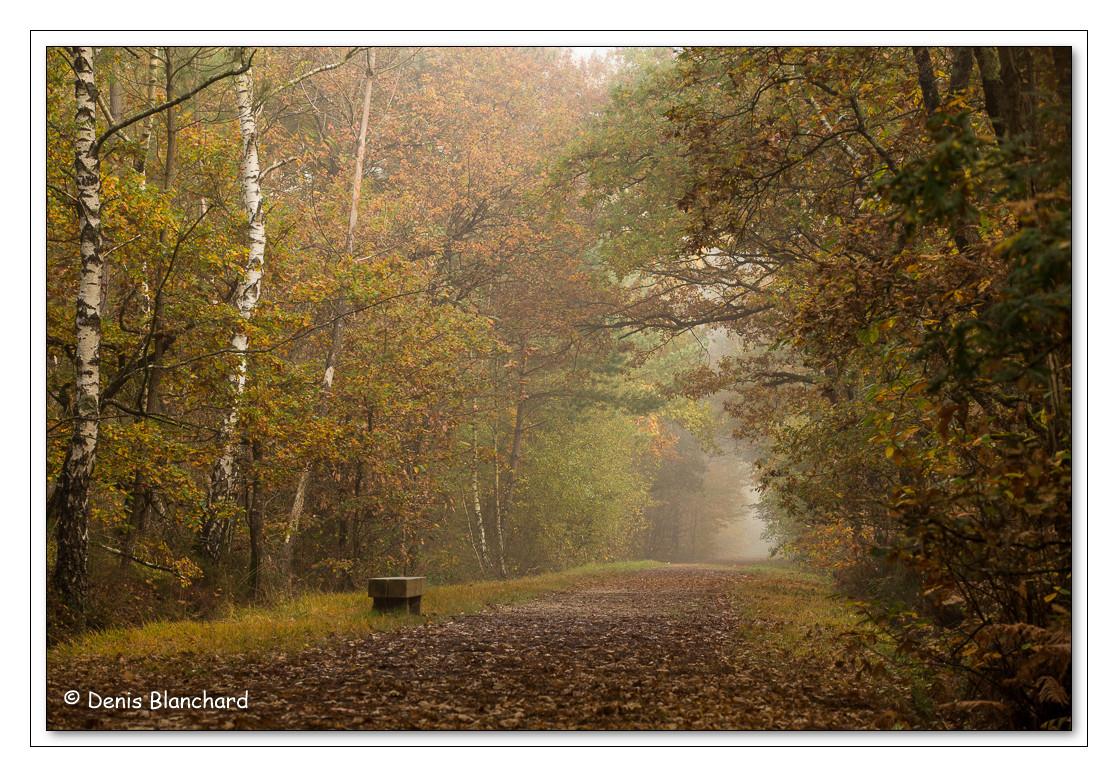 Forêt de Chambier