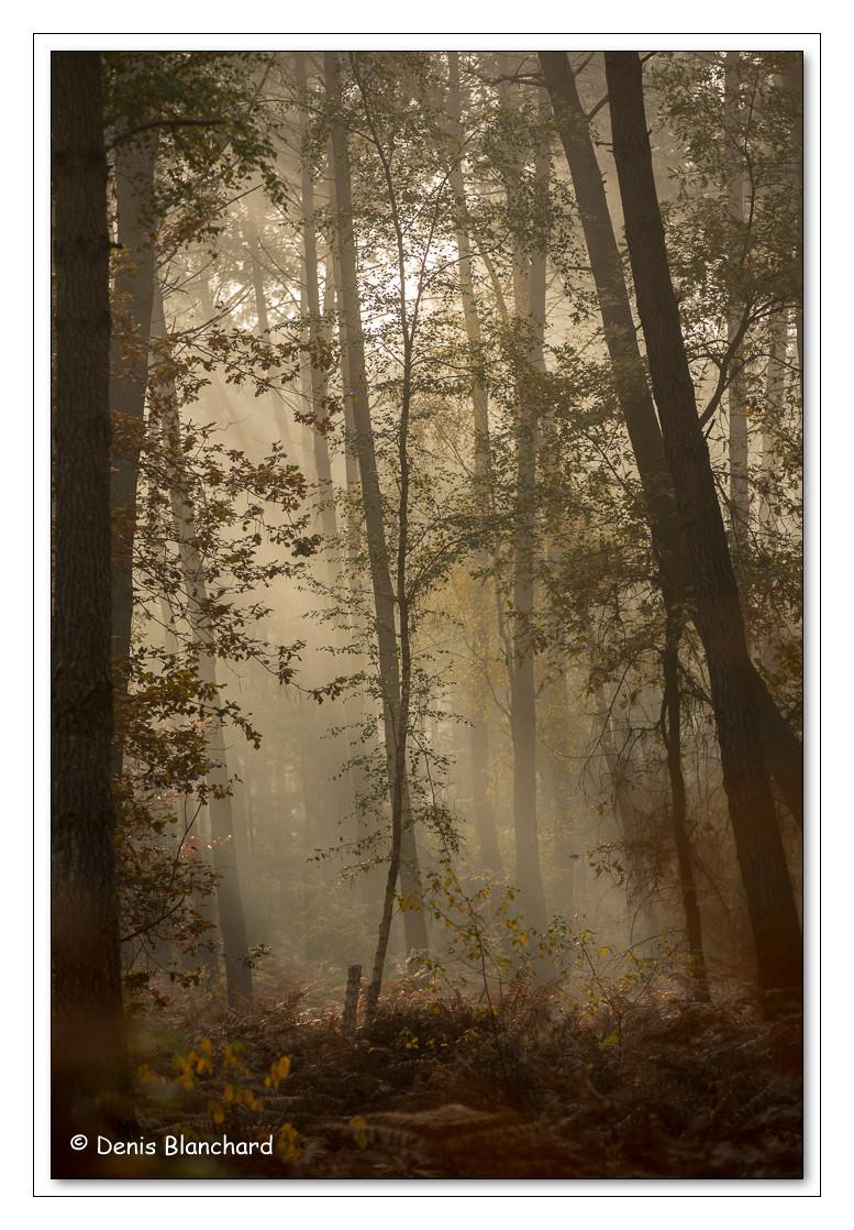 Forêt de Chambier dans la brume